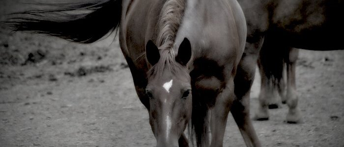 Centro Ippico Riviera Horses