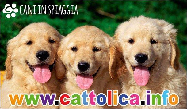 Cani in spiaggia a Cattolica