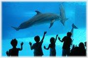 Delfini - Parco Oltremare Riccione