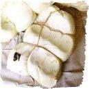 Il tipico formaggio di fossa