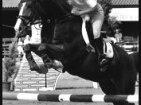 Riviera Horses