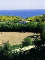 Panorama alla Vallugola nel Parco San Bartolo
