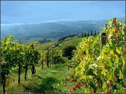 Vigne in Romagna